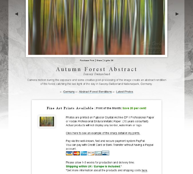 Autumn Forest Abstract Offer